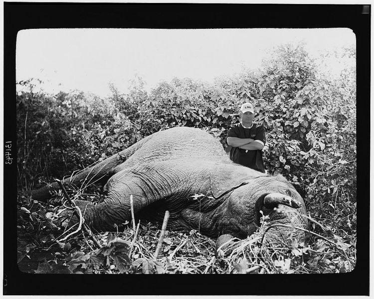 Official Alabama VS LSU thread-les_elephant-copy-jpg
